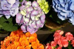 Begonias and Hydrangeas