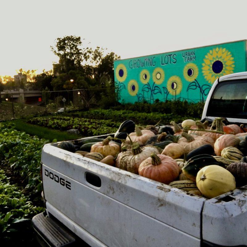 ★ Growing Lots Urban Farm