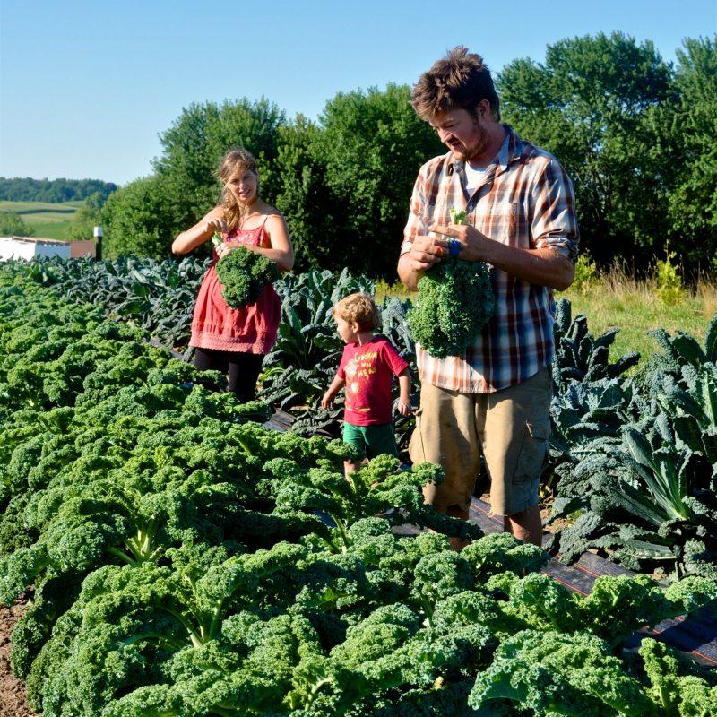 Learn More about Easy Yoke Farm